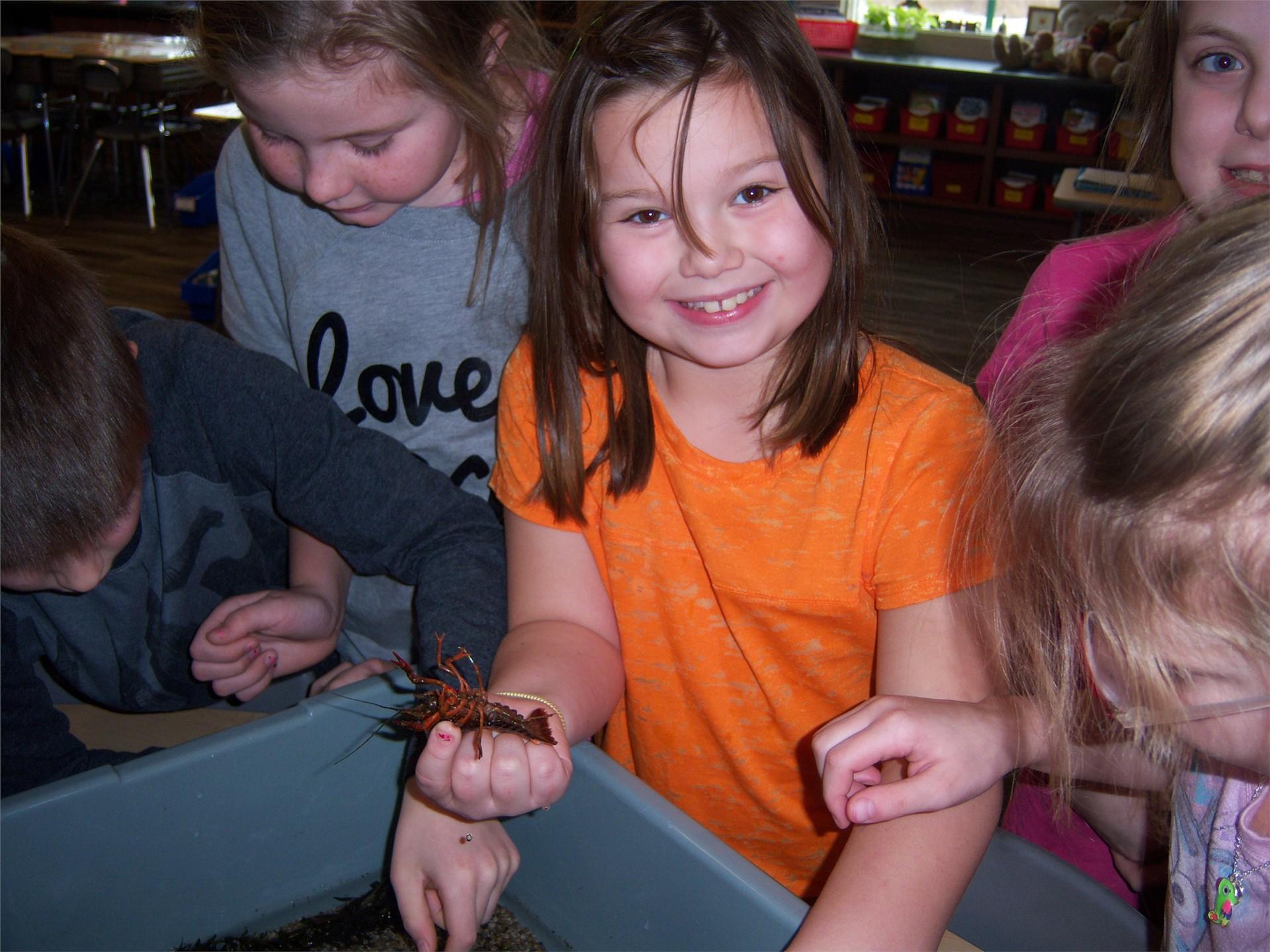 3rd grade crayfish