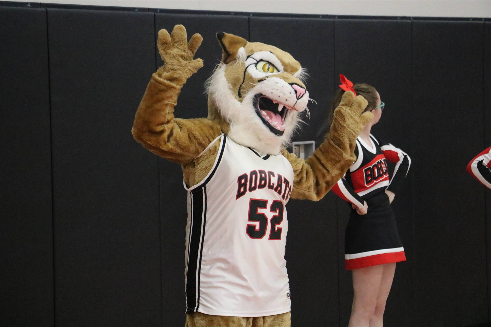 Bruiser the Bobcat