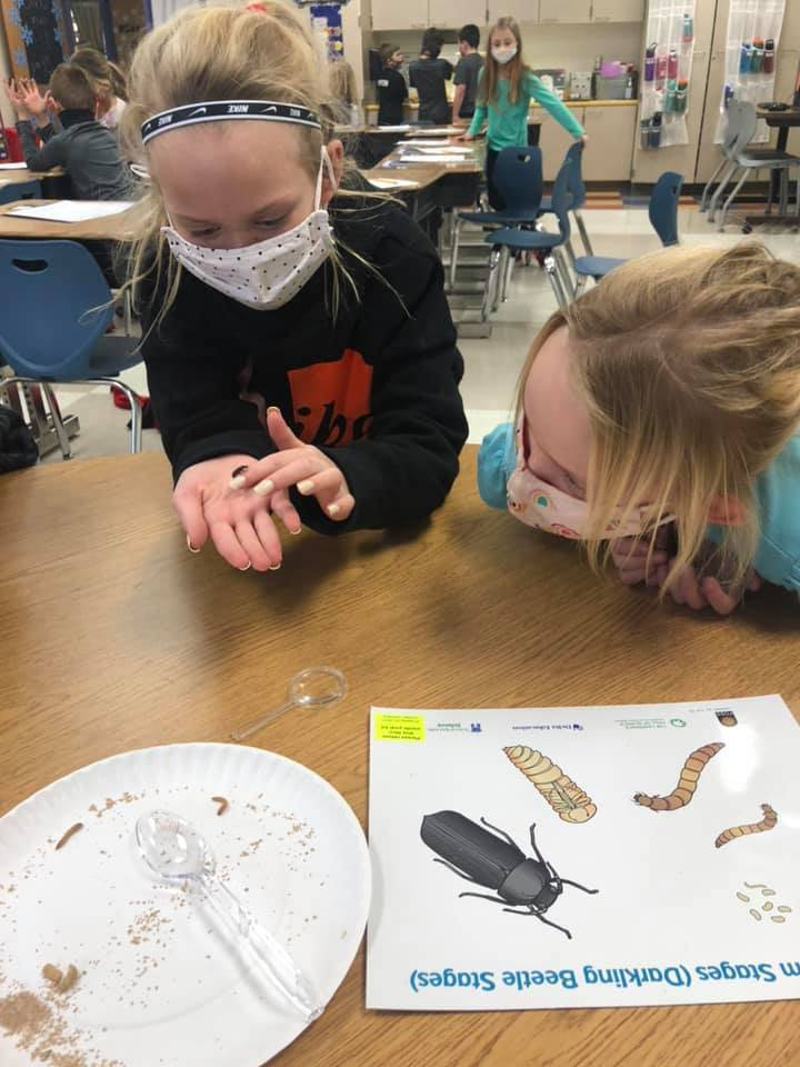 Two second grade students observing beetle during science